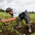 Tierras y recursos para el agro y la paz. Asignaturas pendientes