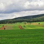 Sector Rural: Retos para el Próximo Gobierno