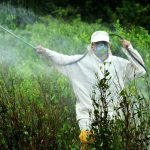 Sin pacto rural ni política sobre  cultivos ilícitos