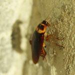 Las cucarachas y los humanos